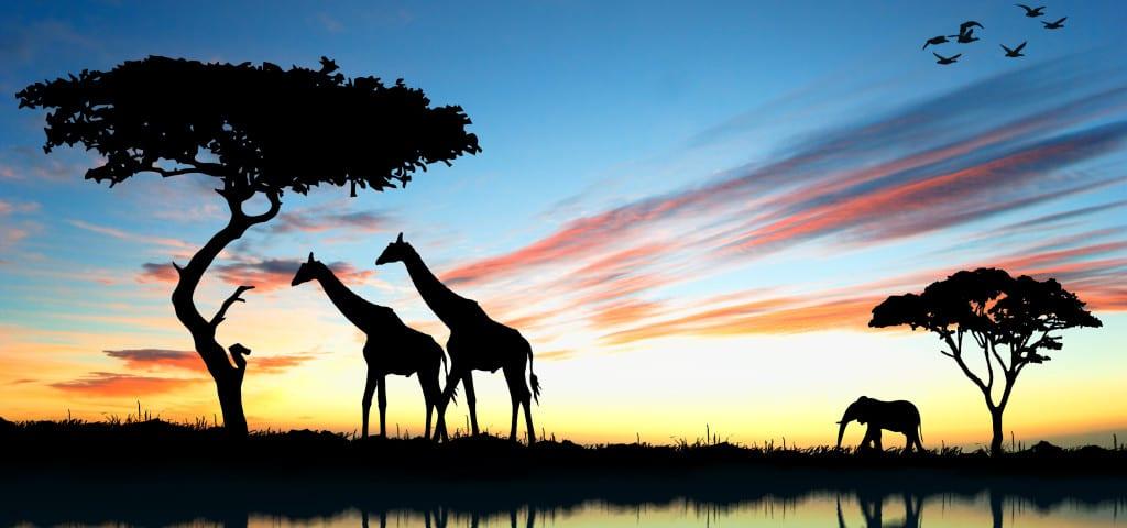 Lua de mel na África do Sul: para guardar na memória